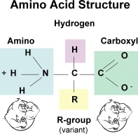 5 Benefits to Gain from Amino Acids